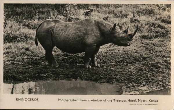 Photo of Rhinoceros