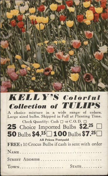 Kelly's Colorful Collection of Tulips Order Form Dansville New York