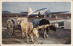 Oxen Pulling Cart at Airport