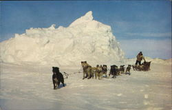 Dog Team on Arctic Ocean Ice Postcard