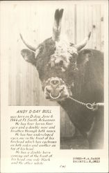 Andy D-Day Bull