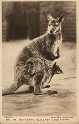Bennett's Wallaby and Young Baby