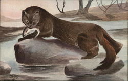 Mink with Caught Fish