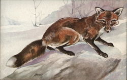Illustration of Red Fox