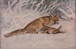 Illustration of Fox with Rabbit Prey