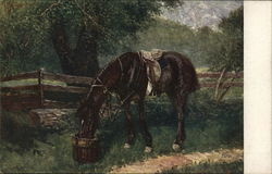 Saddled Horse Drinking from Bucket