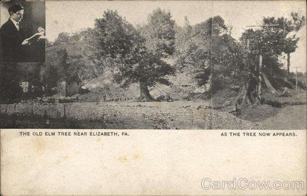 The Old Elm Tree, as the tree now appears Elizabeth Pennsylvania
