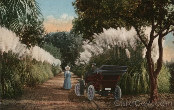 Girl Meeting Man in Automobile - Pampas Grass California