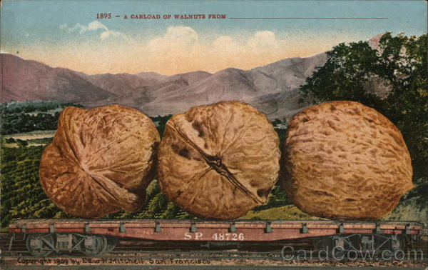 A Carload of Walnuts from California Exaggeration