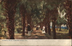 Palmetto Walk, Tampa Bay Hotel