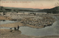 Sheep Ranch on Snake River
