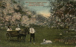 Bell Marguerite Apple Orchard, owned by Stewart Bell