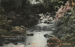 Famous Trout Stream