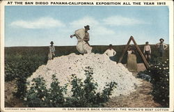In San Diego's Back Country: The World's Best Cotton