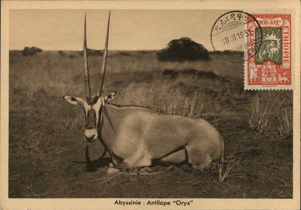 Antelope - Oryx Ethiopia Maximum Cards
