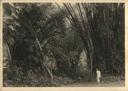 Woman entering jungle