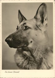 German Shepherd Photo - A True Friend