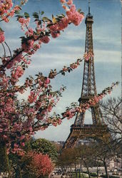 Eiffel Tower and Blossoming Tree