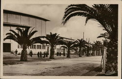 Palm Trees Lining a Downtown Street Postcard