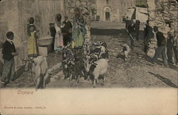 Goats in the streets of Capraie