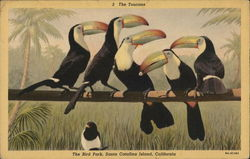 The Toucans, The Bird Park