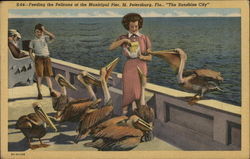 "Feeding the Pelicans at the Municipal Pier, ""The Sunshine City"""