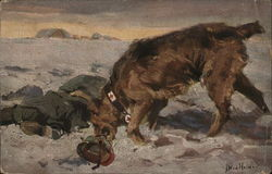 Medical Casualty Dog Picking Up Helmet of Soldier War Victim