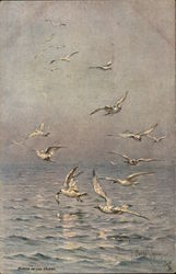 Birds of the Ocean - Seagulls Flying Above Water