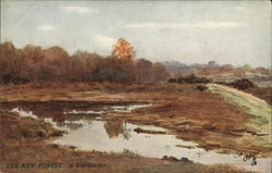 The New Forest. A Wet October