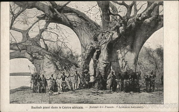 Baobab tree in Central Africa