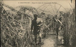 Frame of the Zepplin Felled in the Swamps