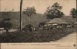 Corral of Mules on an Estate