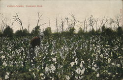 Cotton Picking Postcard