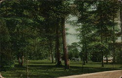 Grass and Trees in Lakemont Park