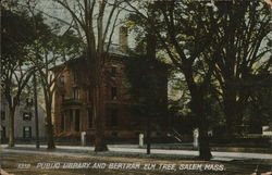 Public Library and Bertram Elm Tree