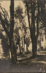 Various Trees In Parkland Setting