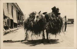 Horse Loaded with Hay, Probably Cuba