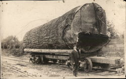Marysville & Northern - Giant Fir Log on Flatbed
