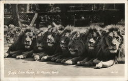 Guy's Lion Farm