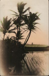 Rice Paddy and Palm Trees, Tinted