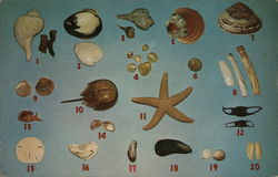 Shells of Cape Cod