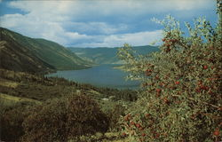 Lake Chelan and Apple Orchards
