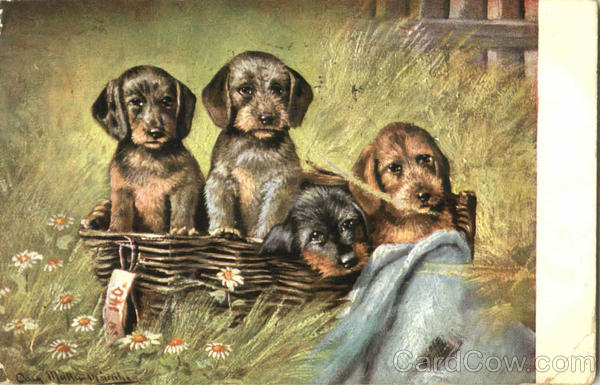 Basket of Puppies Dogs