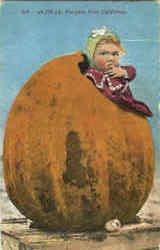 4230 Lb. Pumpkin From California Postcard