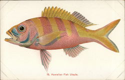 Hawaiian Fish Ulaula
