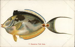 Hawaiian Fish, Kala
