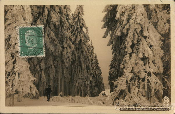White frost in the forest Germany Cancelled on Front (COF)