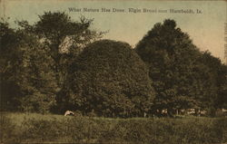 What Nature Has Done, Elgin Broad Postcard