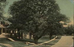 Hawkeye Oak, Second Avenue South