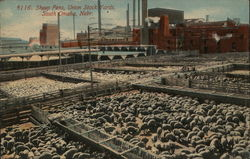 Sheep Pens, Union Stock Yards